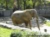 """A """"show elephant"""""""