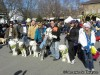 Barkus Parade in Soulard