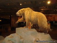 The Museum of Westward Expansion
