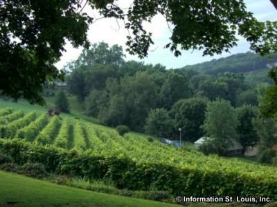 Historic Hermann Missouri vineyard
