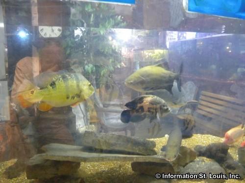 World Aquarium in St Louis Missouri